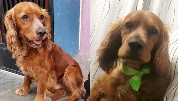 ¡Atención! Ayuda a encontrar al perrito 'Doggy' que se perdió en San Juan de Lurigancho [FOTOS]