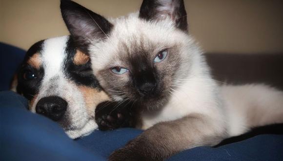 Las pulgas son parásitos que se alojan en el pelaje de nuestras mascotas. (Foto: Pixabay)