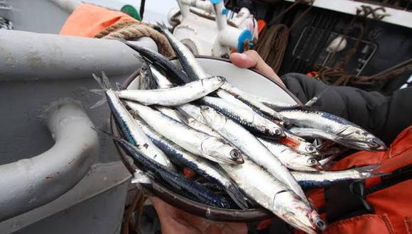 En 2020 se habría registrado una captura de 4.3 millones de TM de anchoveta, superior en 26% al 2019.  (Foto: Produce)