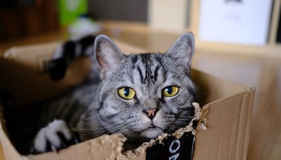 """Un video viral muestra a un hacendoso gatito """"ayudando"""" a su dueño con las tareas del hogar.   Crédito: Pixabay / Pexels / Referencial"""