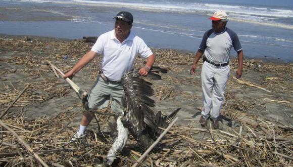 SIGUE LA VARAZÓN. Más pelícanos muertos fueron encontrados ayer en las diversas playas del norte. (Difusión)