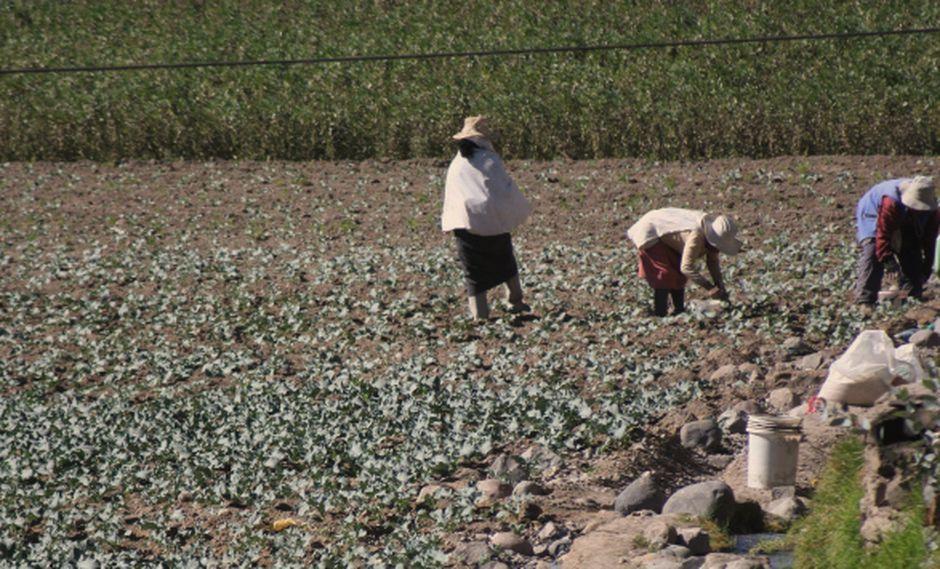 BCP: Desempeño del agro será bajo. (Perú21)