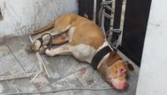 Dueño amenaza con matar pitbull tras atacar a una mujer y a su menor hija en el Callao. (Facebook)