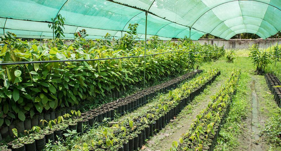 Semana Nacional de la Innovación: Darán a conocer los avances en el sector agrario del Perú