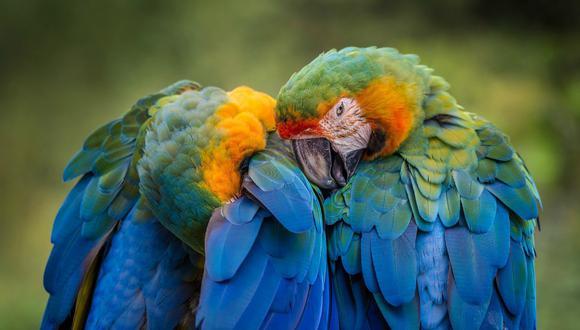 Los animales fueron donados por diferentes propietarios y empezaron a maldecir al poco tiempo de estar juntos en la misma jaula. (Foto: Referencial / Pixabay)