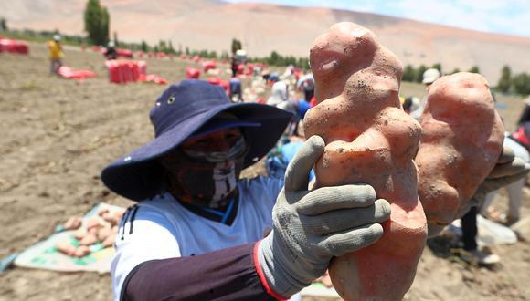 """""""Hoy, 21 años después de aprobada la LPA, podemos analizar la eficacia de la norma: el país se convirtió en un exportador neto de alimentos, 220 mil hectáreas ganadas a los desiertos dedicadas a la agroexportación, que requirieron inversiones por US$16,000 millones"""". (Foto: Alessandro Currarino / GEC)"""