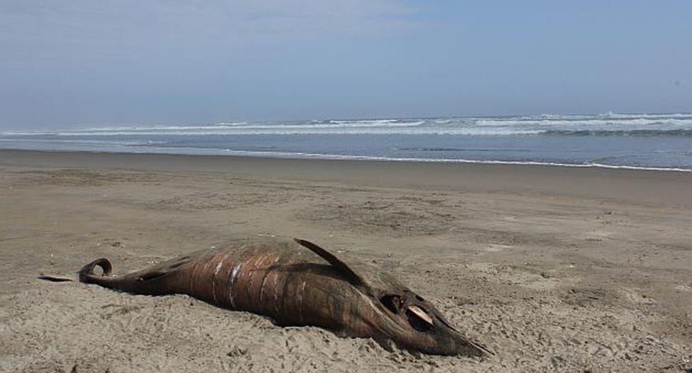 Siguen apareciendo delfines muertos en las playas. (Fabiola Valle)