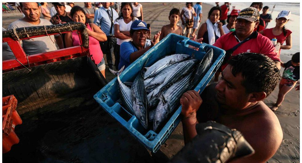 Producción para consumo humano directo identifica oportunidad a partir del salmón de EE. UU.