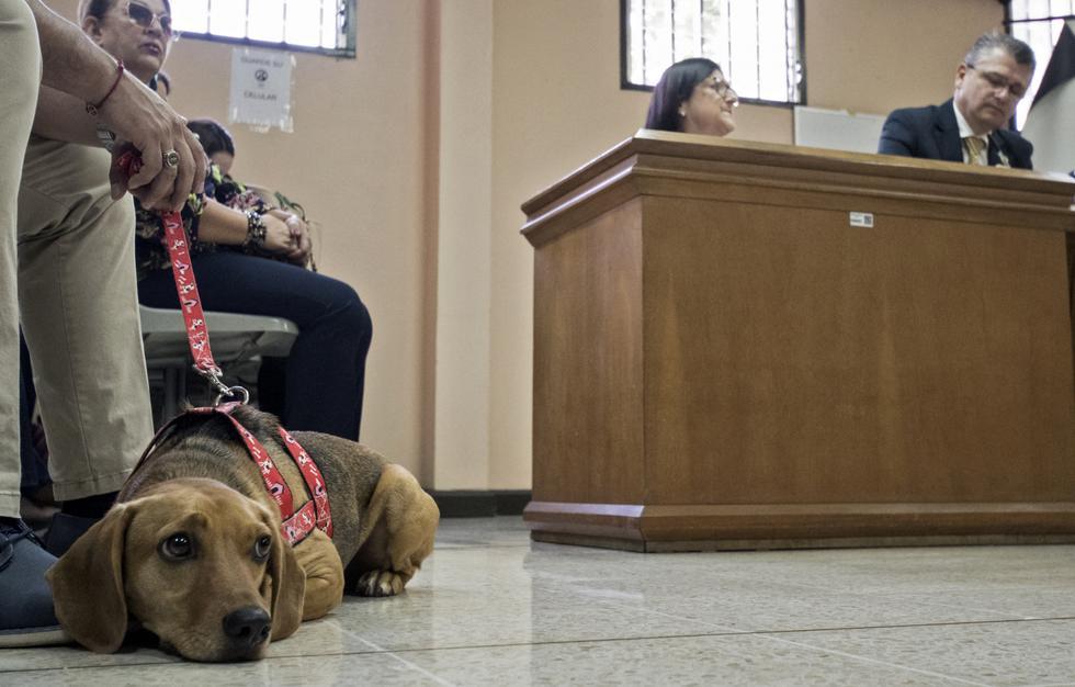 Desde cachorro 'Campeón' fue sometido a maltrato según se denunció en el proceso. (AFP)