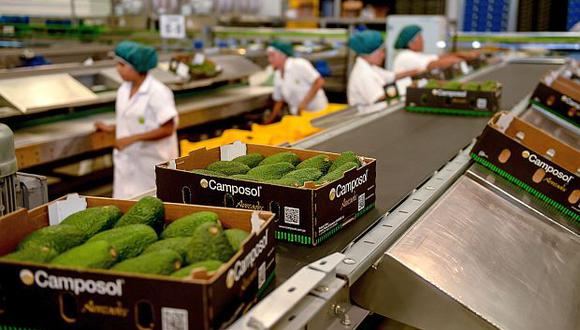 La palta Hass peruana podrá ingresar al mercado de Tailandia.(Foto: GEC)