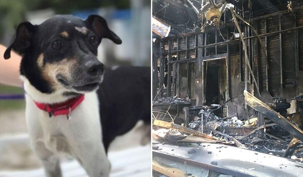 El can ayudó con sus ladridos a que todos los integrantes de su familia pudieran escapar del siniestro que consumía su vivienda. (Foto: @kkuizon en Twitter)