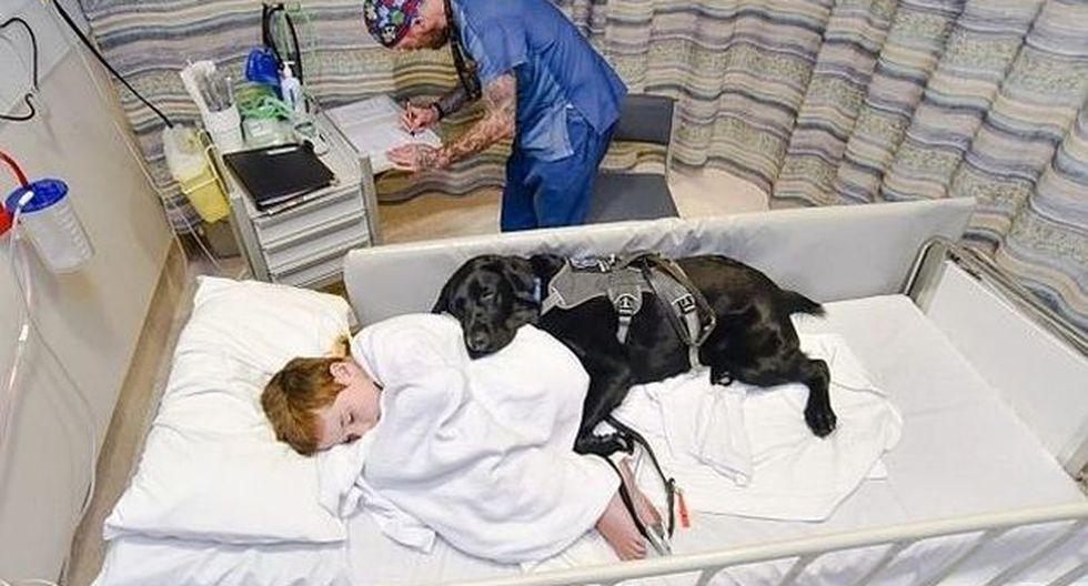 Mahe, el perro que acompaña a su dueño autista hasta en la cama de un hospital. (Louise Goossens)