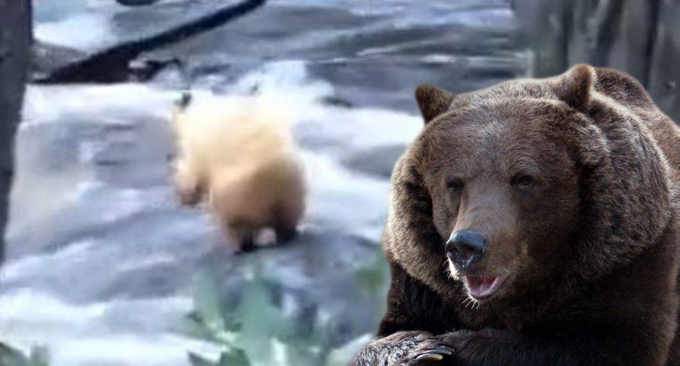 Un hombre grabó el apuro que pasó un oso en un bosque. (YouTube)