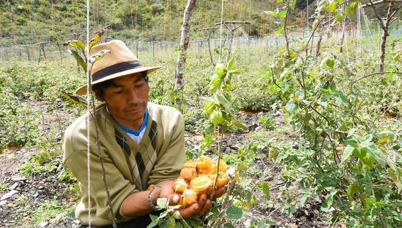 Estados Unidos demandó frutas por US$ 681 millones, un aumento en sus pedidos del 14% y una participación del 29%. (Foto: FZS Perú)