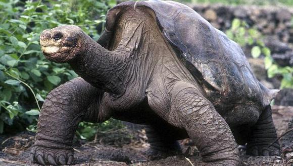 Emblemática tortuga tenía más de 100 años de edad y pesaba 90 kilos.