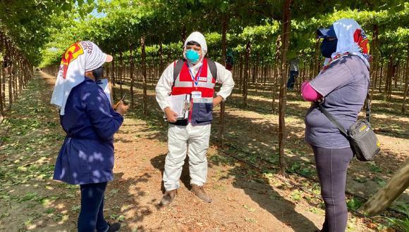 Ica: Sunafil inspeccionó 245 empresas agroindustriales y agroexpotadoras logrando que 3,200 trabajadores agrarios sean incorporados a planilla. (Foto: Sunafil)