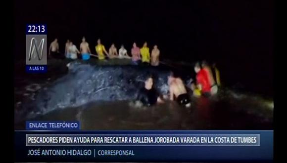 Los pescadores trataron de devolver a la ballena al mar, pero no pudieron, por lo que pidieron ayuda. (Canal N)