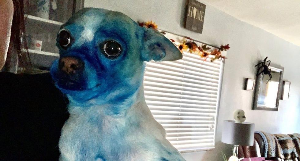 El perro fue llevado al veterinario, según la usuaria que compartió la foto. (Foto: @coldemoji | Twitter)