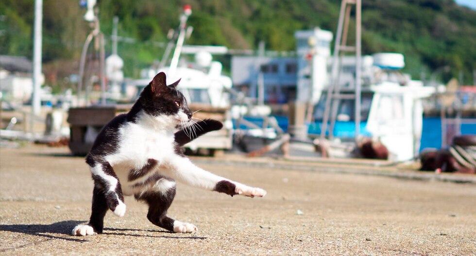 Fotógrafo japones captura gatos en posiciones ninja. Su cuenta es todo un fenómeno viral en Instagram. (Hisakata Hiroyuki | photo.accent)