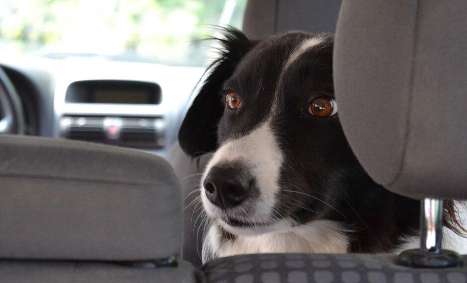 """El travieso can fue liberado luego de que su propietario lograra """"guiarlo"""" con éxito para abrir las puertas. (Foto: Pixabay/Referencial)"""