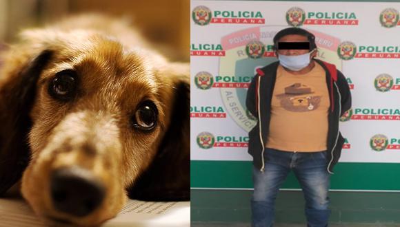 Perrita que fue abusada por sujeto continúa en la casa donde fue agredida en Los Olivos