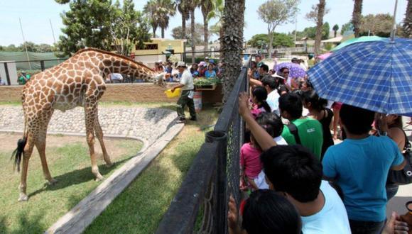 Parque de las Leyendas: ¿Animales reciben o no una adecuada alimentación? (USI)
