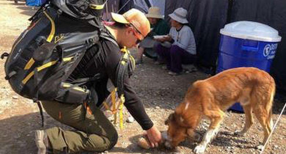 Médico veterinario voluntario llevó asistencia médica a mascotas tras huaicos en Mirave. (Captura)