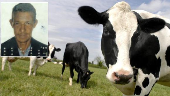 La vaca se desplomó sobre el tejado del hombre cuando pastaba cerca a su vivienda. (Internet/20minutos.es)