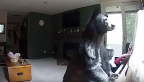 Estados Unidos: Un oso entró a una casa y sorprendió al tocar el piano. (Youtube)