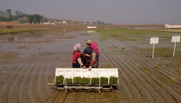 Corea del Norte alertada por una sequía que puede empeorar la escasez de comida. (AFP)