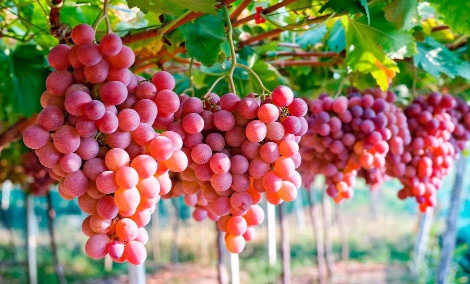 Los principales destinos de nuestra uva fresca son Estados Unidos, Unión Europea y China. (Foto: Mincetur)