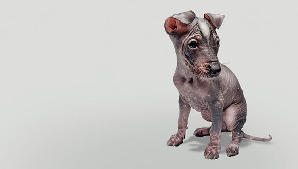 Día del perro peruano.(GETTY)