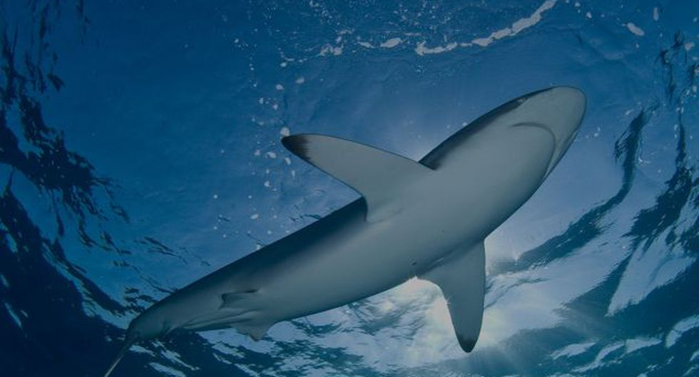 Discovery Channel presenta especiales sobre los tiburones. (Difusión)