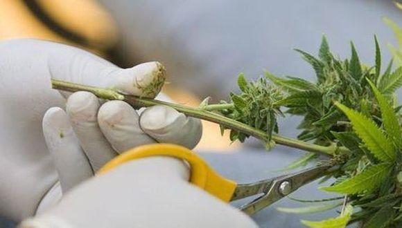 Votarán uso medicinal de la marihuana en el Congreso. (USI)