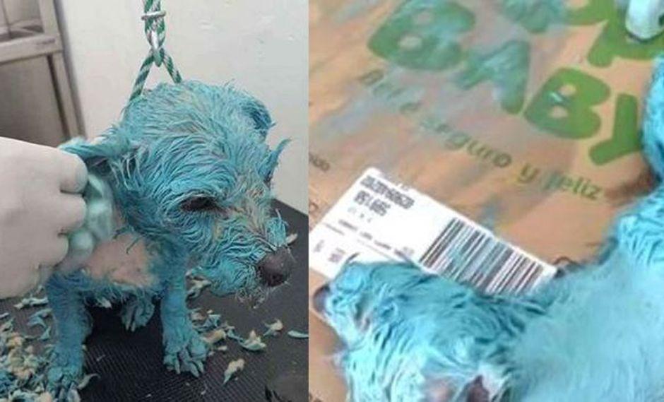 Autoridades en México aseguran que la 'perrita azul' que murió no fue maltratada. (Facebook|@RaulJuliaLevy)