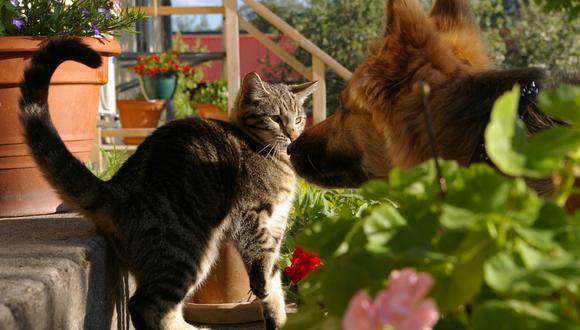 Una perrita no pudo resistir que su dueño le prestara más atención a un gato que a ella. (Foto: Pixabay/Referencial)