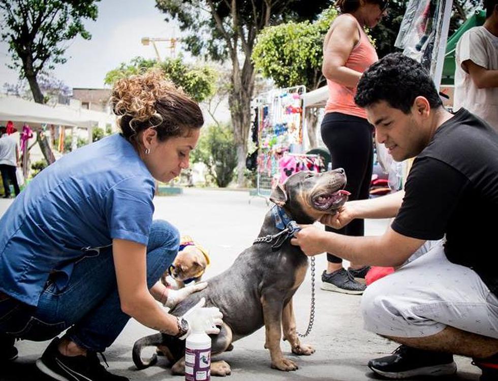 Patatón es la primera teletón que se realizará en nuestro país en favor a los animales. (Fotos: Facebook Fundación Rayito/ Producciones Vida)