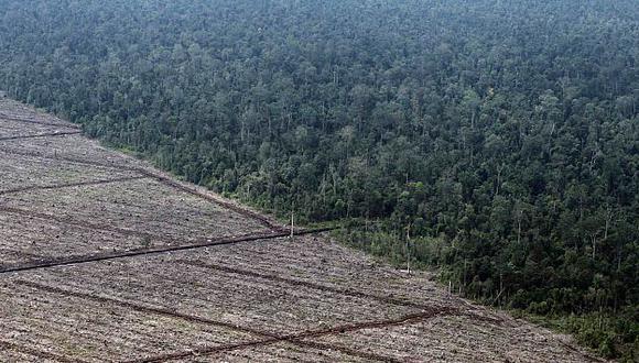La pérdida de bosques fue mayor en las zonas tropicales. (Reuters)