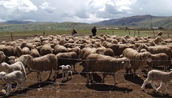 Los campesinos recibieron capacitación en la crianza de ovinos. (Difusión)