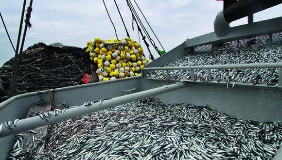 La anchoveta (Engraulis ringens) es la única especie autorizada para producir harina de pescado en el Perú. Aquí una vista del momento de la descarga. El peso de lo capturado es automáticamente enviado a las autoridades. (Archivo GEC)