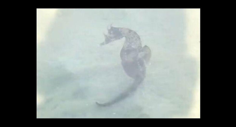 El animal estaba en la playa. (Captura)