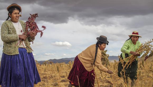 Las mujeres participan en las labores agrícolas así como en las actividades complementarias como la venta de productos. (Foto: GEC)