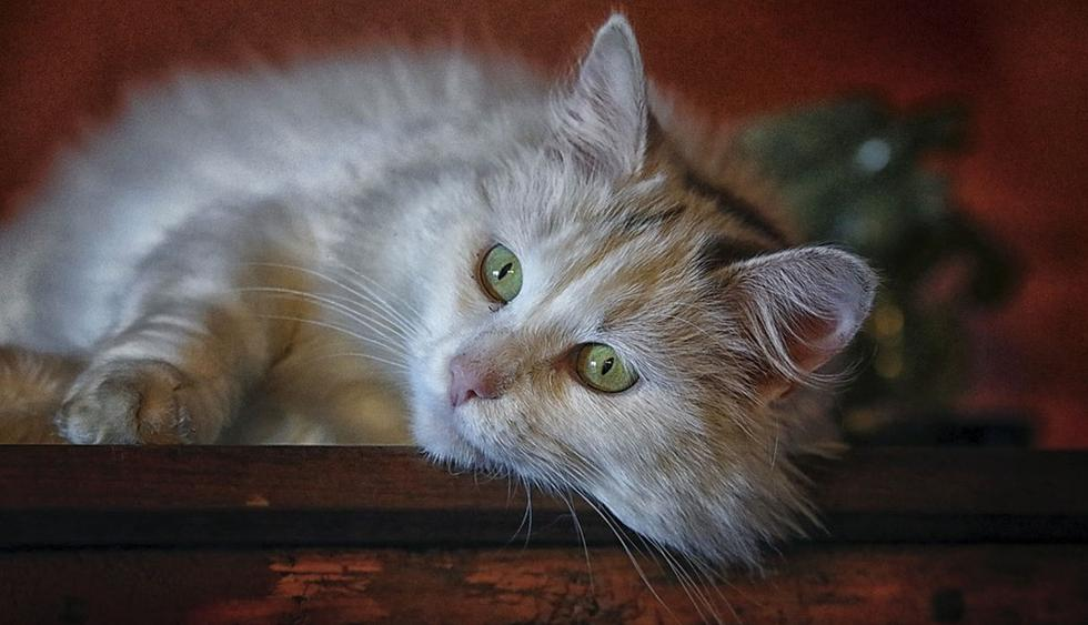 La pequeña felina se volvió protagonista de una emocionante escena. (Pixabay / WenPhotos)
