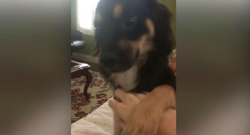 El perro dio que hablar en la red social. (YouTube: ViralHog)