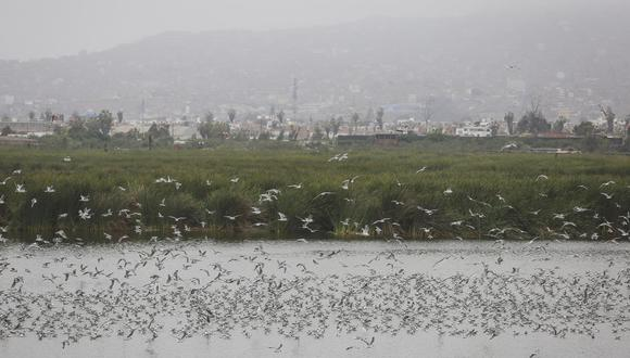 El municipio indicó que según las medidas dadas por el Gobierno, las áreas públicas al aire libre son seguras y necesarias para los ciudadanos. Foto: Andina