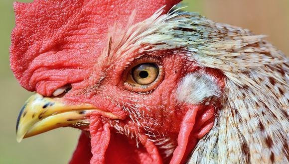 Facebook viral: Gallo mata a picotazos a una anciana cuando recogía huevos | Australia | FB | Face