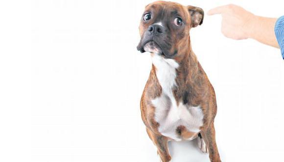 Si su mascota es 'malcriada', búsquele un entrenador. Es una buena opción para corregir su conducta. (USI)