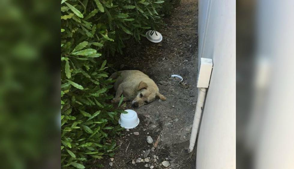 El animal durmió encima de tierra por varios meses y sobrevivió comiendo alimento que algunos conductores le obsequiaban. (Foto: Love Leo Rescue)