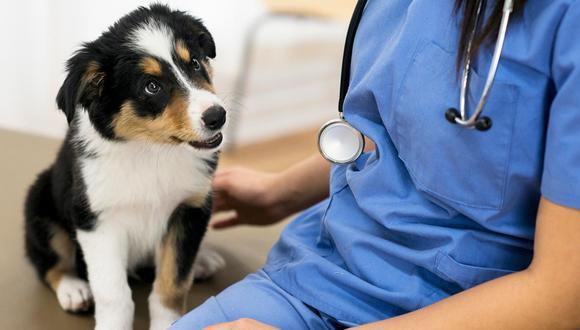 La labor de los veterinarios va más allá del cuidado y tratamiento de animales.