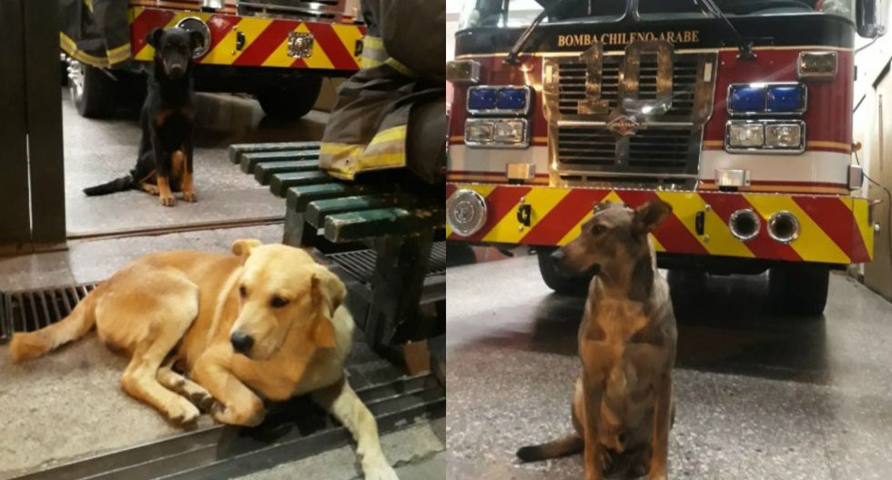 Los canes se quedaron en el cuartel de la Décima Compañía de Bomberos de Valparaíso hasta que culmine el show de fuegos artificiales. (Foto: Captura)